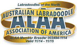 Labradoodles of the North ALAA Logo