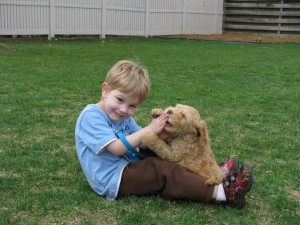 australian labradoodles and kids