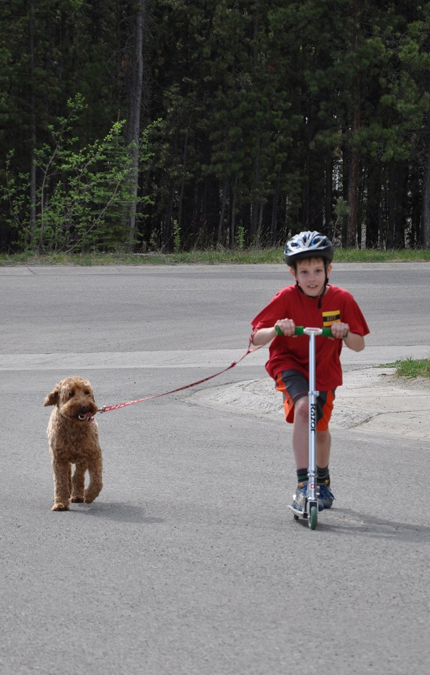 kids and australian labradoodle walking