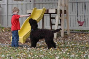 kids dog training australian labradoodle